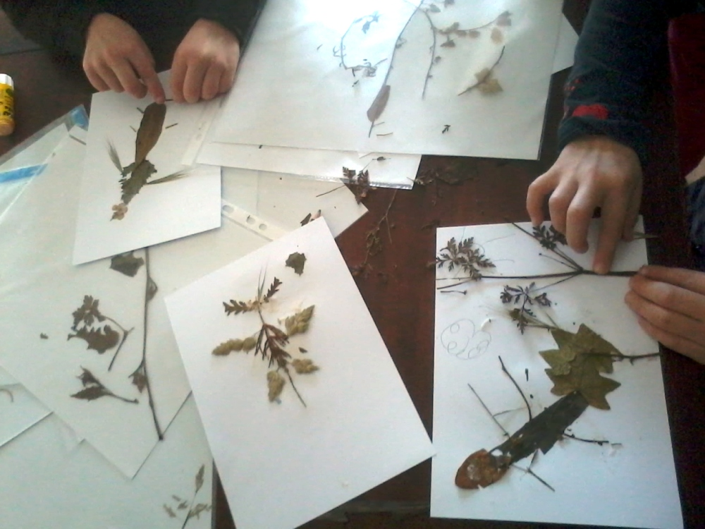 2016-02-25-insectes