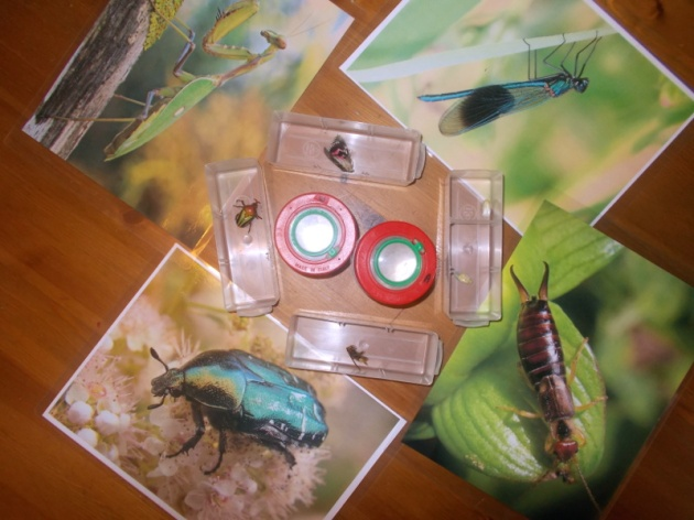 2016-10-26-insectes