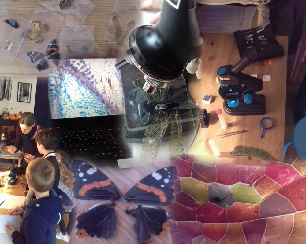 2016-11-17-collage-solen