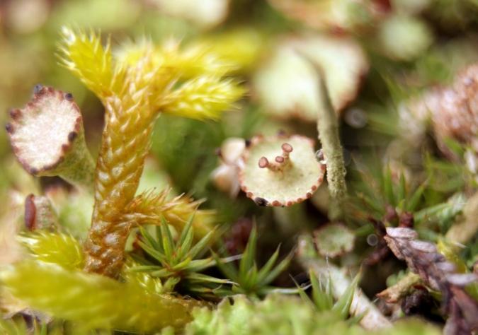lichen4