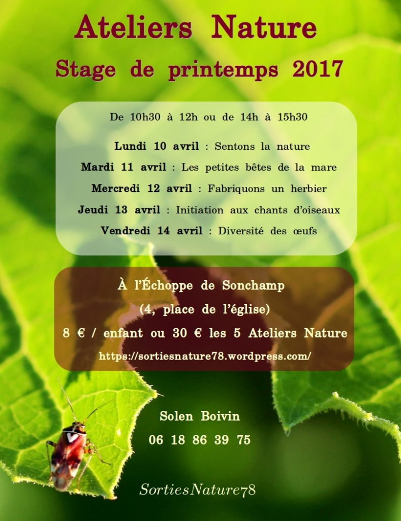 affiches-2017-04-stage