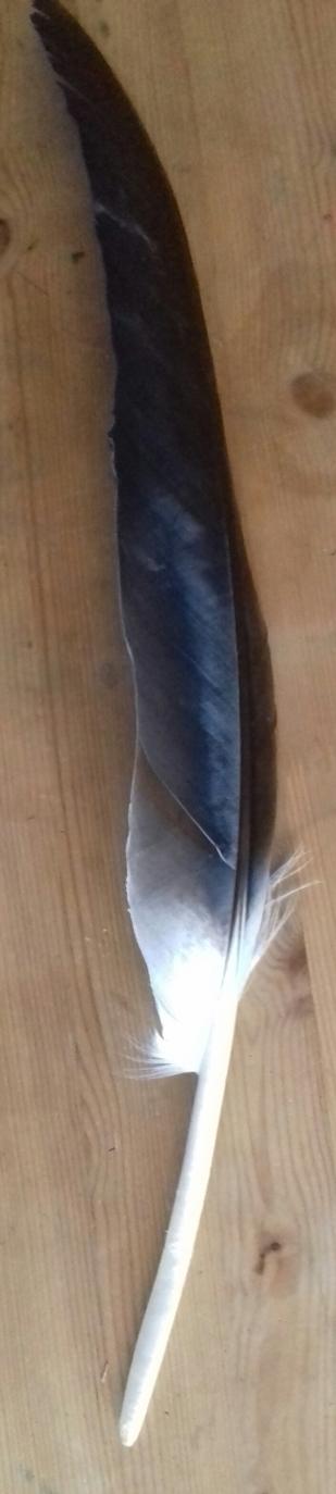 solen-atelier-plumes-010
