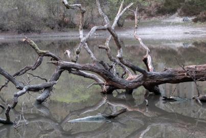 SortiesNature-amphibiens1