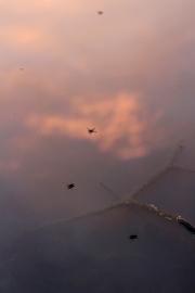 SortiesNature-amphibiens2
