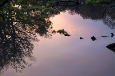 SortiesNature-amphibiens3