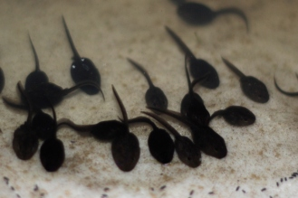 SortiesNature-amphibiens7