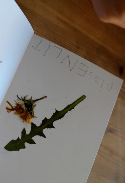 SortiesNature78-herbier13