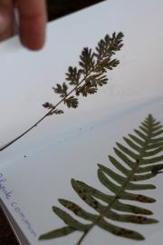 SortiesNature78-herbier2