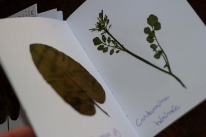 SortiesNature78-herbier3