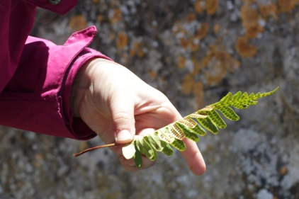 SortiesNature78-herbier8