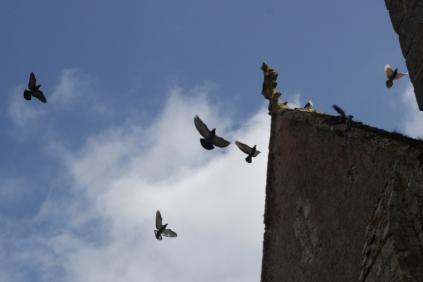 SortiesNature78-oiseaux1