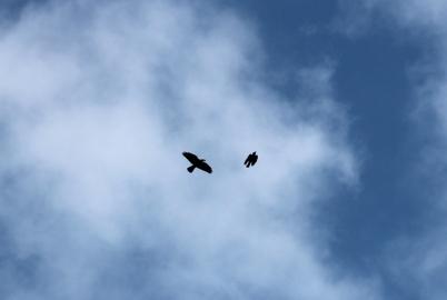 SortiesNature78-oiseaux4