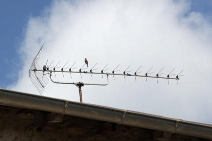 SortiesNature78-oiseaux7