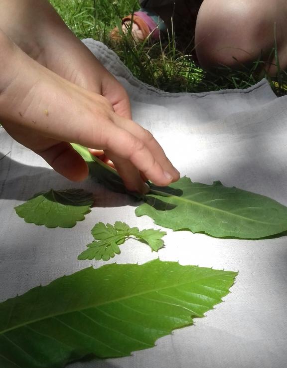impression-de-feuilles-darbre-051