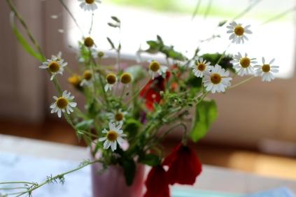 SortiesNature78-fleurs