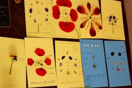 SortiesNature78-fleurs3
