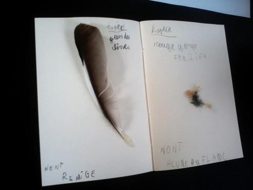 2017-07-12-SortiesNature78-plumes2