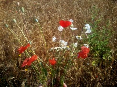 2017-07-13-SortiesNature78-fleurs1