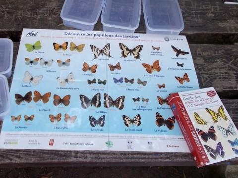 2017-07-19-SortiesNature78-papillons8