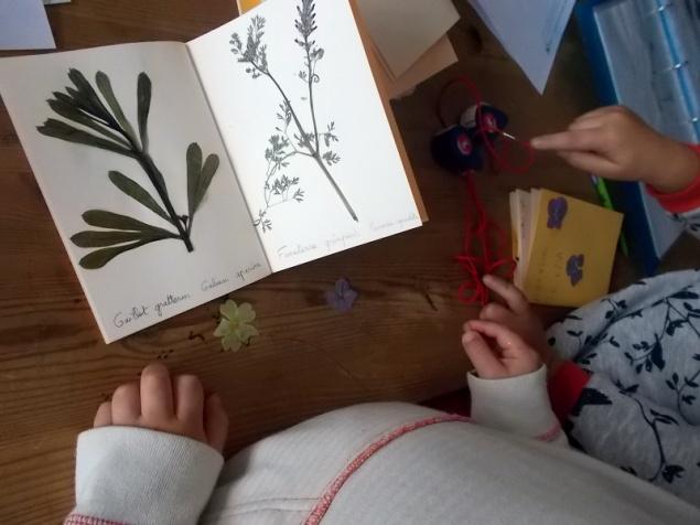 2017-09-29-SortiesNature78-herbier3