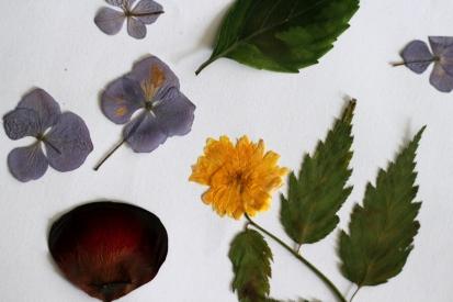 SortiesNature78-herbier-prepa