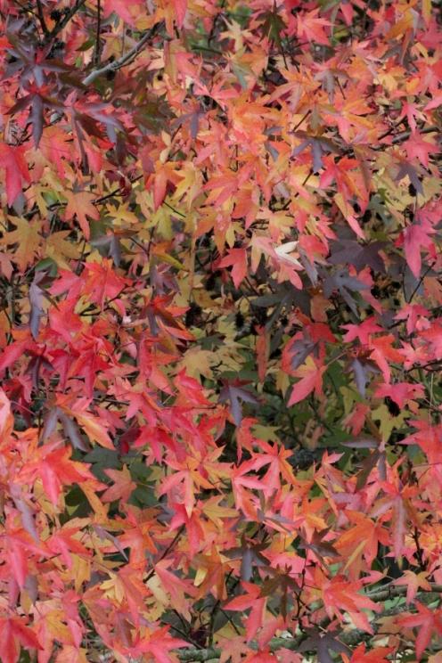 2017-10-18-SortiesNature78-arbre4