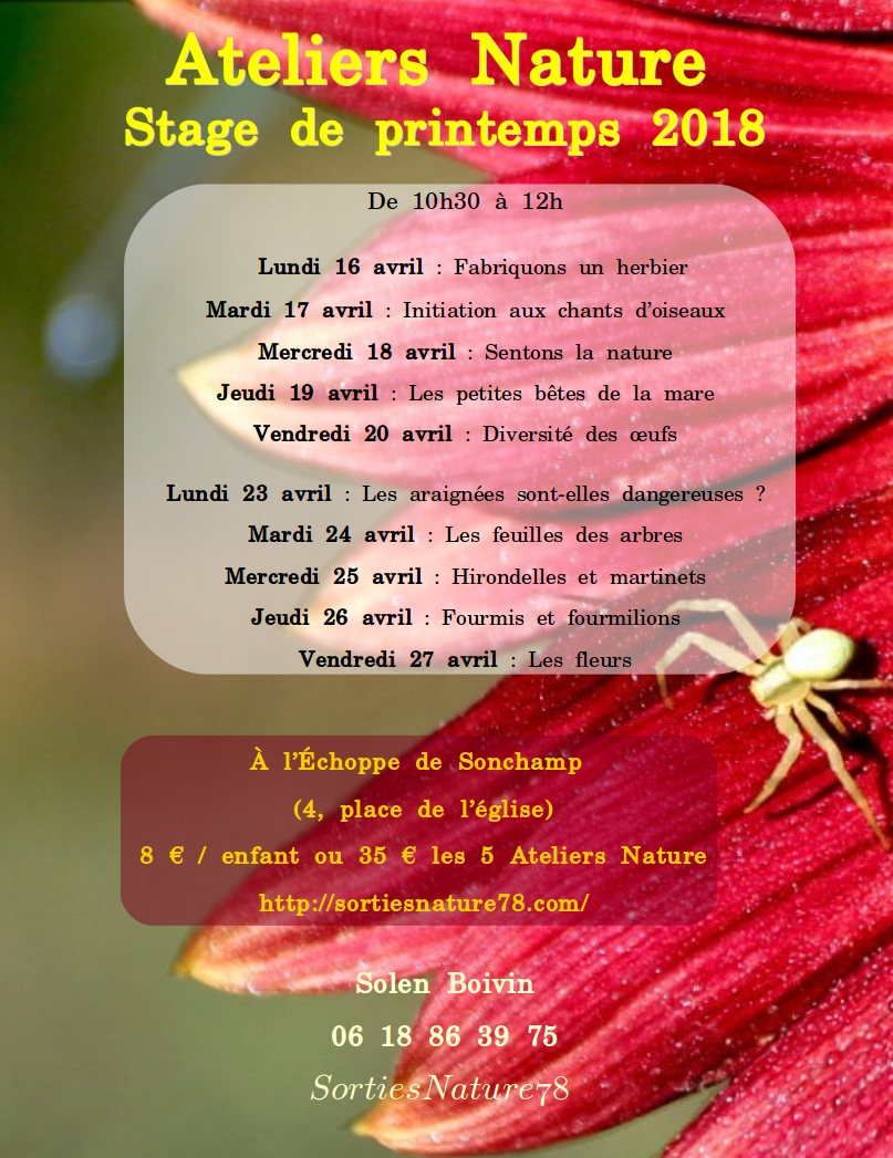 affiches-2018-04-stages