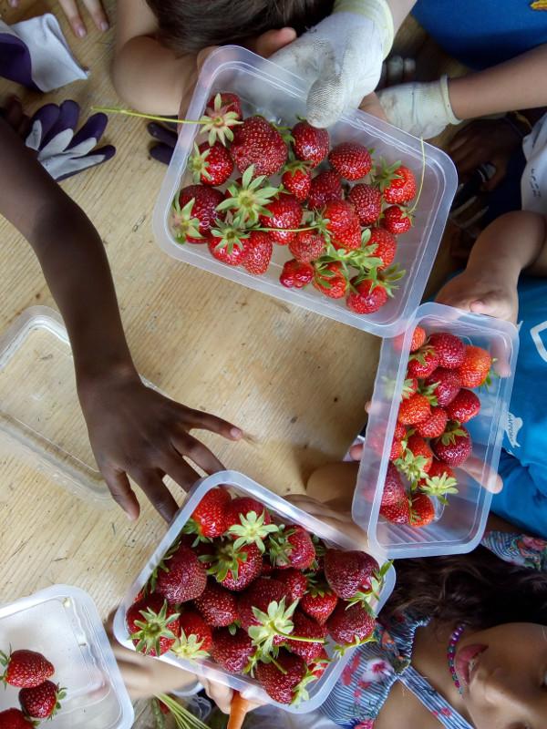 2018-06-01-SN78-fraises