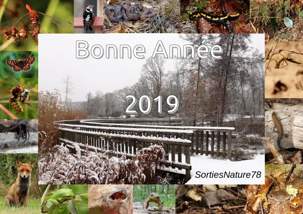 bonne-annc3a9e-2019-sn78