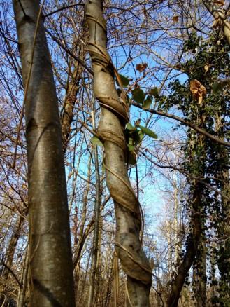 2019-02-18-arbres-sculpteur