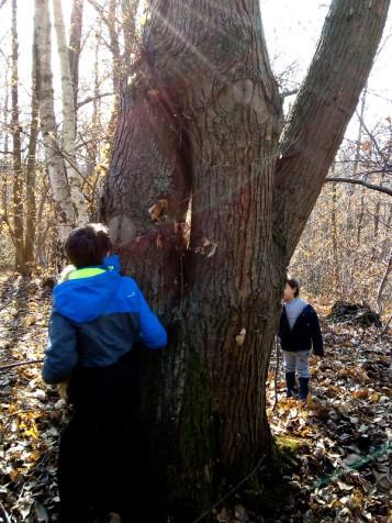 2019-02-18-arbres2