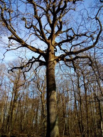 2019-02-18-arbres3
