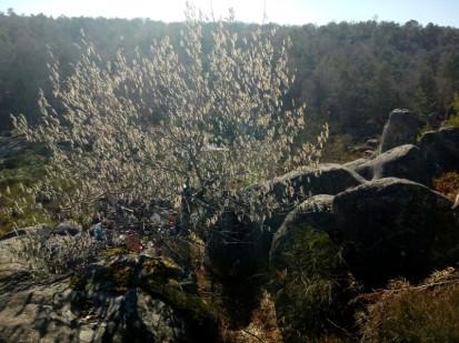 2019-02-24-tremble-fontainebleau